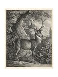 Woodland Deer I Plakater af  Ridinger