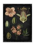 Study in Botany I Poster von  Vision Studio