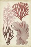 Seaweed Specimen in Coral III Prints by  Vision Studio