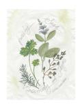 Parsley and Sage Kunstdrucke von Elissa Della-piana