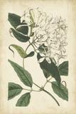 Botanical Display II Posters by  Vision Studio