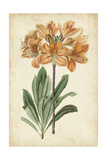 Botanical Display V Prints by  Vision Studio