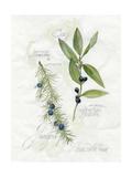 Bay Leaf and Juniper Kunstdrucke von Elissa Della-piana