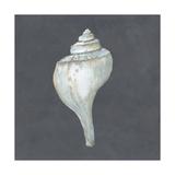 Shell on Slate IV Kunstdrucke von Megan Meagher