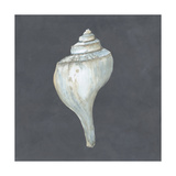 Shell on Slate IV Print by Megan Meagher