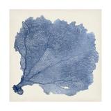 Sea Fan V Kunstdrucke von Tim O'toole