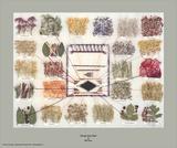 Navajo-Tafel der Pflanzenfarben Kunstdrucke von Ella Myers