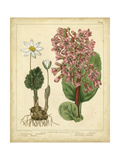 Garden Flora III Pôsters por Sydenham Edwards