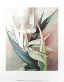 White Bird Of Paradise Kunstdrucke von Georgia O'Keeffe