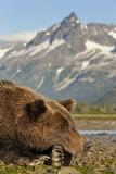 Brown Bear and Coastal Mountains, Katmai National Park, Alaska Lámina fotográfica por Paul Souders
