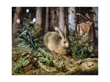 A Hare in the Forest Giclée-tryk af Hans Hoffmann