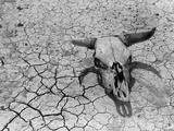 Cattle Skull on the Parched Earth Lámina fotográfica por Arthur Rothstein