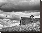 Flying Solo Stretched Canvas Print by Trent Foltz