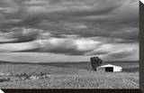 In the Gully Stretched Canvas Print by Trent Foltz