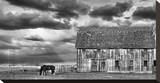 Horse and Barn Stretched Canvas Print by Trent Foltz