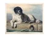 A Distinguished Member of the Humane Society Giclée-tryk af Edwin Henry Landseer