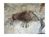 Replica of Cave Painting of Boar from Altamira Cave Giclée-tryk