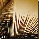 Light on Palms III Stretched Canvas Print by Malcolm Sanders