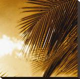 Light on Palms IV Stretched Canvas Print by Malcolm Sanders