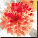 Peach Flower I Bedruckte aufgespannte Leinwand von Sandra Jacobs