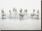 White Horses I Stretched Canvas Print by Irene Suchocki