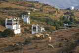 Pigeon House Near Tarabados, Tinos, Cyclades, Greek Islands, Greece, Europe Fotoprint van  Tuul
