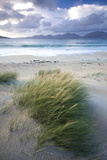 Beach at Luskentyre with Dune Grasses Blowing Fotografisk tryk af Lee Frost