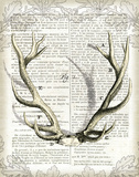Regal Antlers on Newsprint I Posters by Sue Schlabach