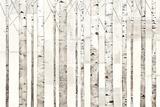 Birch Trees on White Kunstdrucke von Avery Tillmon