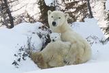Polar Bear (Ursus Maritimus) and Cubs Lámina fotográfica por David Jenkins