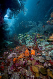 Reef Scene, Dominica, West Indies, Caribbean, Central America Fotografisk tryk af Lisa Collins