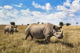 Rhinoceros, Ol Pejeta Conservancy, Laikipia, Kenya, East Africa, Africa Fotografisk tryk af Ann and Steve Toon