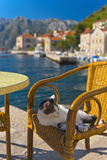 Waterside Cafe and Cat, Perast, Bay of Kotor, UNESCO World Heritage Site, Montenegro, Europe Photographic Print by Alan Copson