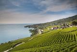 Lavaux Terraced Vineyards on Lake Geneva, Montreux, Canton Vaud, Switzerland, Europe Photographic Print by Angelo Cavalli
