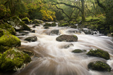 River Plym Flowing Fast Through Dewerstone Wood, Shaugh Prior, Dartmoor Np Devon, UK, October 写真プリント : ロス・ホディノット