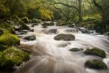 River Plym Flowing Fast Through Dewerstone Wood, Shaugh Prior, Dartmoor Np Devon, UK, October Photographic Print by Ross Hoddinott