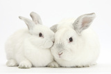 Elderly White Rabbit, Foggy, 8 Years Old, and His Young Son, 9 Weeks Old Reproduction photographique par Mark Taylor