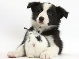 Black and White Border Collie Puppy and Baby Bunny Lámina fotográfica por Mark Taylor