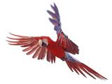 Green Winged Macaw {Ara Chloroptera} in Flight, Captive Lámina fotográfica por Mark Taylor