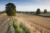 Field Stubble after Harvest, Haregill Lodge Farm, Ellingstring, North Yorkshire, England, UK Photographic Print by Paul Harris