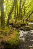 Golitha Falls, River Fowey Flowing Through Wooded Valley, Near St Cleer, Cornwall, UK, May 2012 写真プリント : ロス・ホディノット