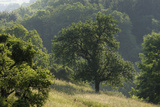 Apple Trees in Meadow, Roudenhaff, Mullerthal, Luxembourg, May 2009 Photographic Print by  Tønning