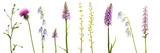 Meadow Flowers, Fleabane Thistle, Bearded Bellfower, Common Spotted Orchid, Twayblade, Austria Fotografisk tryk af  Benvie