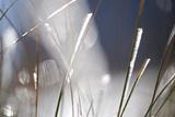 Snow on Grass, Durmitor Np, Montenegro, October 2008 Photographic Print by  Radisics
