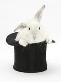 White Rabbit in a Black Top Hat Impressão fotográfica por Mark Taylor