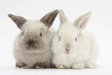 White and Grey Baby Rabbits Impressão fotográfica por Mark Taylor
