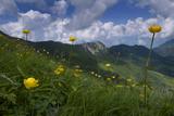 Globeflowers (Trollius Europaeus) Flowering, Liechtenstein, June 2009 Photographic Print by  Giesbers