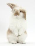 Young Fluffy Rabbit Standing Up Fotoprint van Mark Taylor