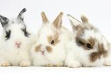 Three Cute Baby Bunnies Sitting Together Impressão fotográfica por Mark Taylor