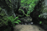 Halerbach - Haupeschbach Flowing Between Moss Covered Rocks with Ferns (Dryopteris Sp.) Luxembourg Photographic Print by  Tønning